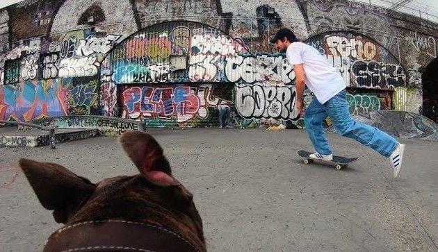 スケボーをイヌが撮影