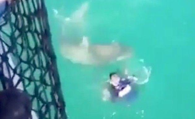 フランス海軍がサメに襲われる