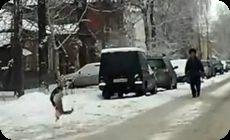 雪上の戦い。ニャンコの決闘。