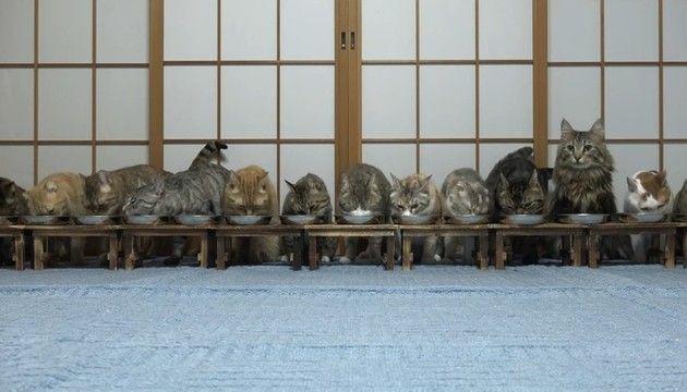 なぜか突然逃げる猫たち