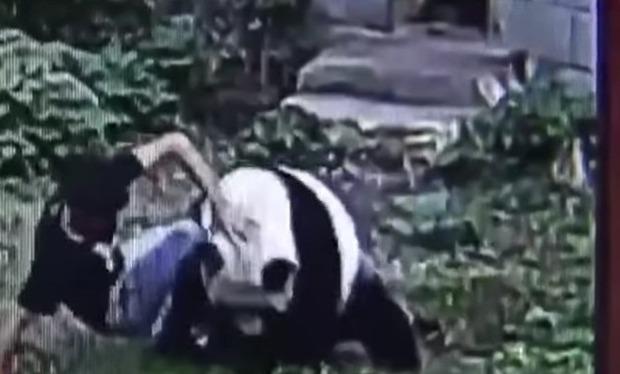 人間とパンダの戦い