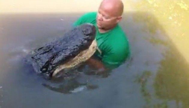 水中でワニにエサを上げるオッサン