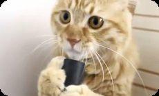 掃除機を舐める猫