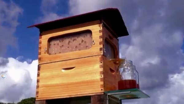 ハチミツをいつでも取り出せる蜂の巣の巣箱