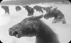 凍りついた馬