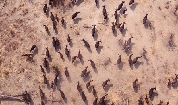 アフリカをドローンで空撮