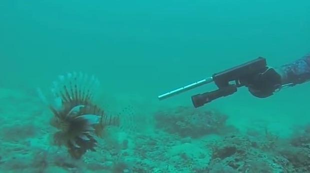 ミノカサゴを拳銃で撃つ