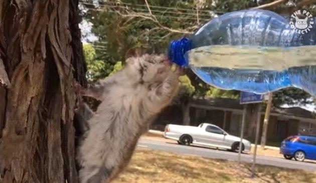 いきものが水を飲む様子まとめ