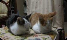 ダブルで寝落ちする猫